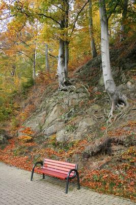 Las Bukowy, autor: Małgorzata Gębala