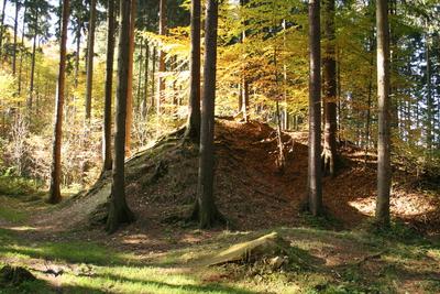 Rezerwat przyrody Nad Białką, autor: Małgorzata Gębala