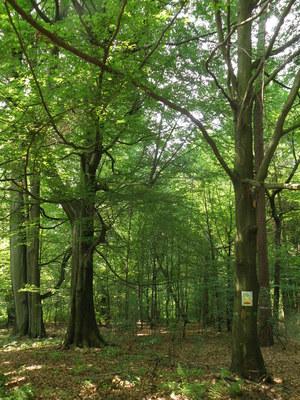 Rezerwat przyrody Płużnica, autor: Karolina Olszanowska-Kuńka