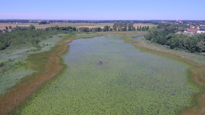 Rezerwat przyrody Staw Nowokuźnicki, źródło: RDOŚ Opole