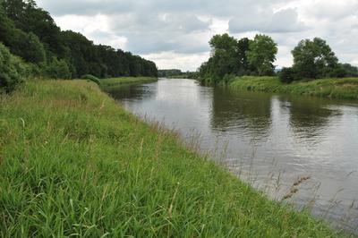 Łęg Zdzieszowicki na brzegu Odry, źródło:RDOŚ Opole