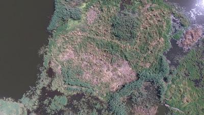 wyspa na Jeziorze Nyskim, autor: Dorota Twardzik