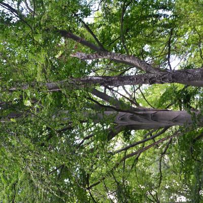 Buczyna w rezerwacie przyrody Tęczynów, autor: Dorota Twardzik