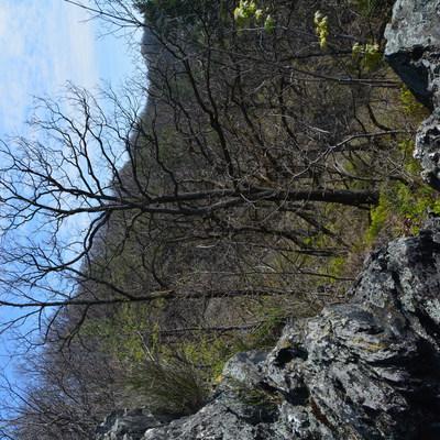 Dąbrowa w rezerwacie przyrody Olszak, autor: Dorota Twardzik