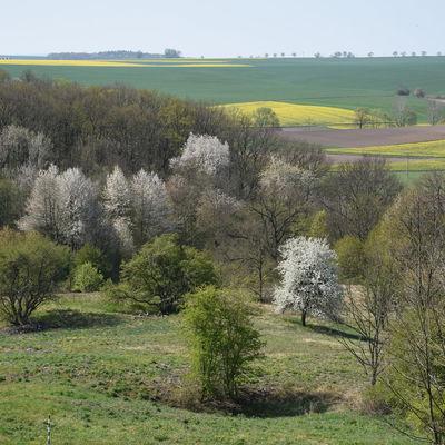 Góra Gipsowa wiosną, autor: Karolina Olszanowska-Kuńka