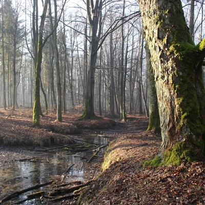 Rezerwat przyrody Srebrne Źródła, autor: Karolina olszanowska-Kuńka
