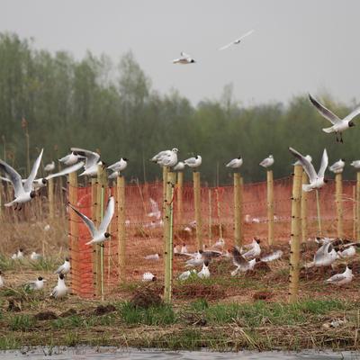 Galeria Działania Ochronne w obszarze Natura 2000 Zbiornik Nyski